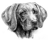 Weimaraner Personalised Greetings Card